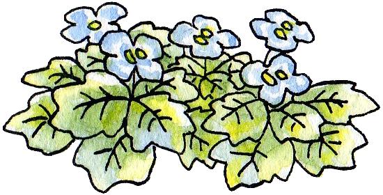 オオイヌノフグリの画像 p1_2