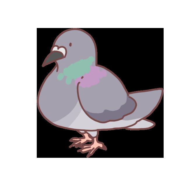 鳩のイラスト