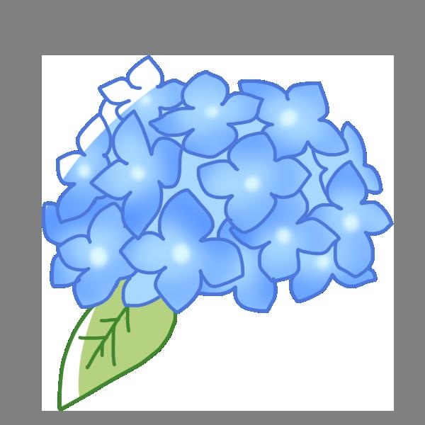 青い紫陽花のイラスト