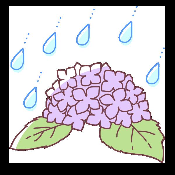 雨と紫陽花のイラスト