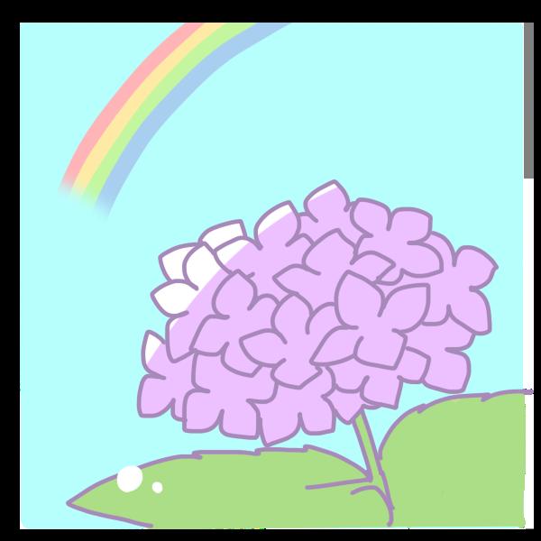 紫陽花と虹のイラスト