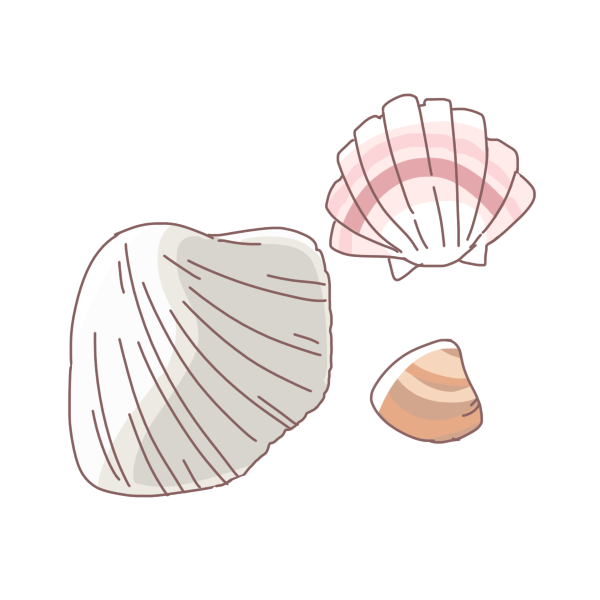 色んな貝のイラスト