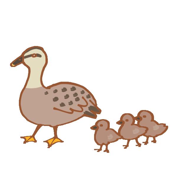 親子鴨のイラスト