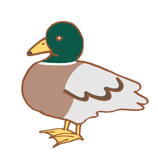 鴨のイラスト