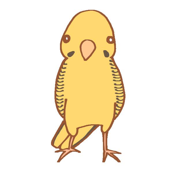 黄色いインコのイラスト