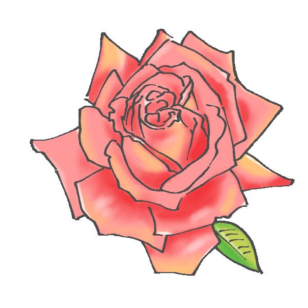 ピンク色の薔薇のイラスト
