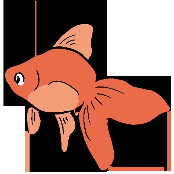 金魚2のイラスト かわいいフリー素材が無料のイラストレイン