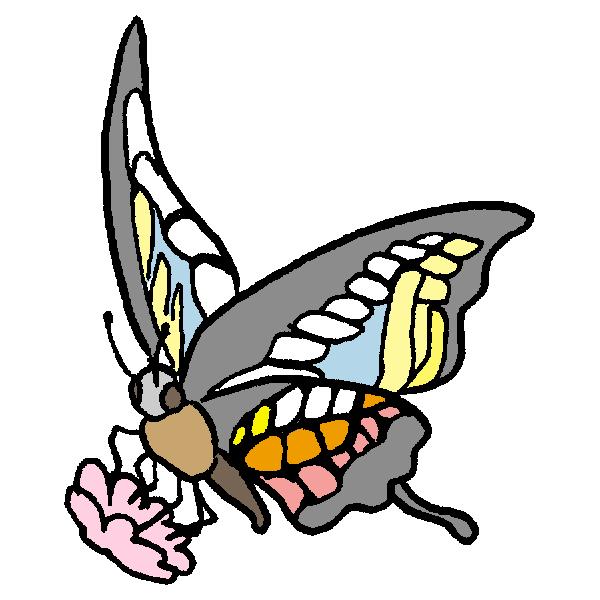 蝶1のイラスト
