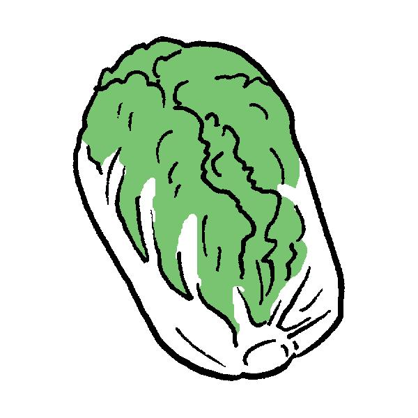 白菜のイラスト | かわいいフリー素材が無料のイラストレイン
