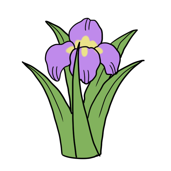 菖蒲の花のイラスト かわいいフリー素材が無料のイラストレイン