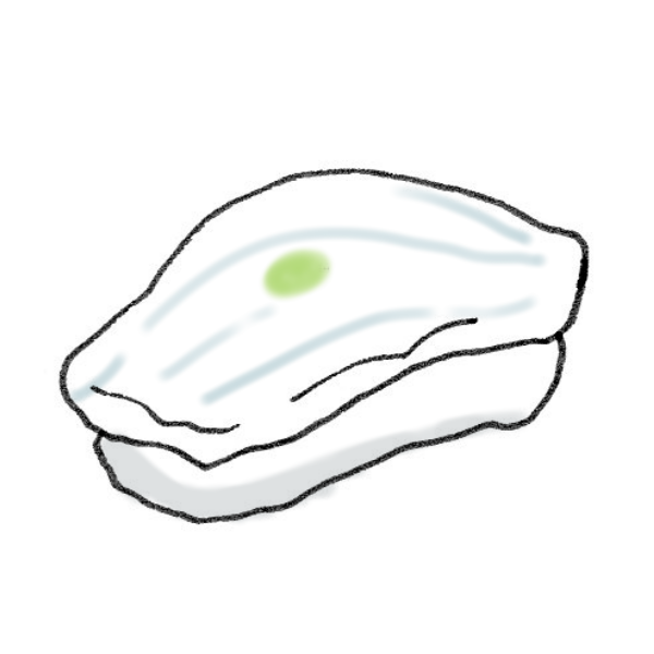 イカのイラスト