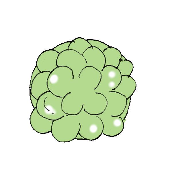 多肉植物のイラスト