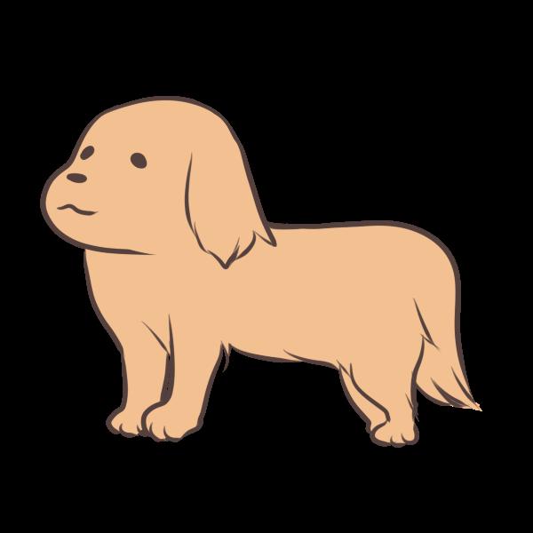 見つめる犬のイラスト