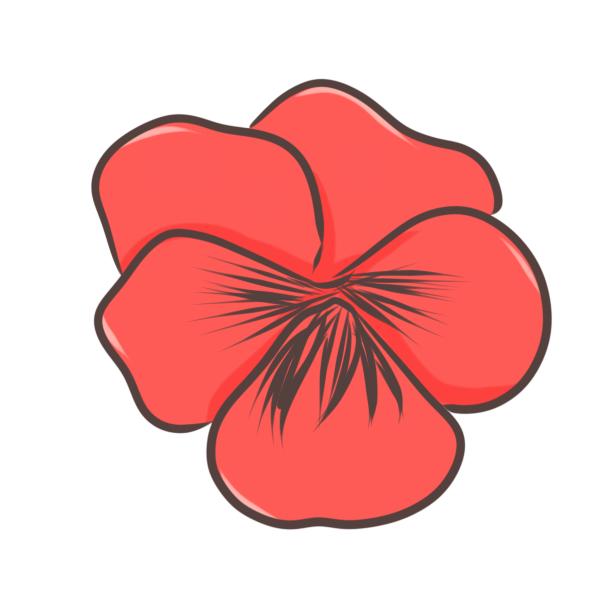 パンジー(赤)のイラスト