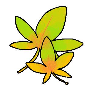 紅葉(黄)のイラスト