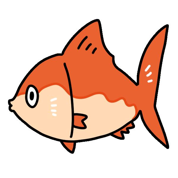 赤い魚のイラスト