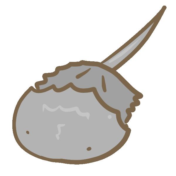 カブトガニのイラスト