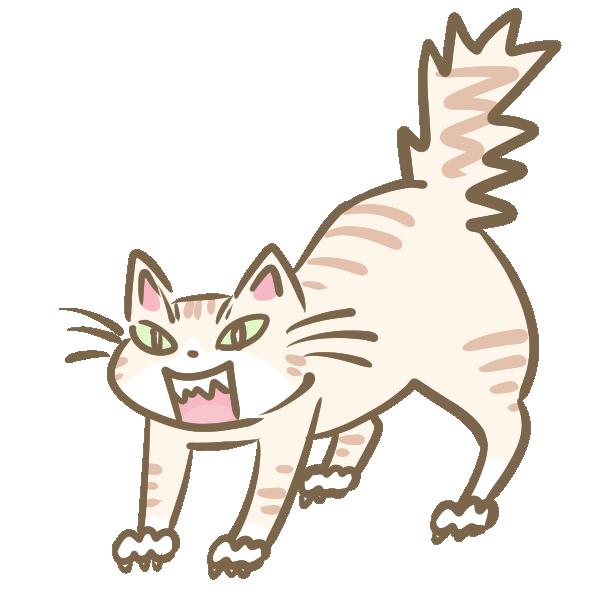 怒った猫のイラスト