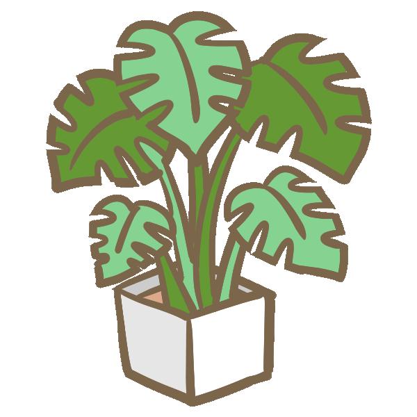 モンステラの鉢植えのイラスト