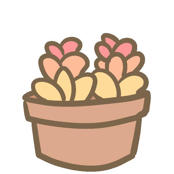 多肉植物(3)のイラスト