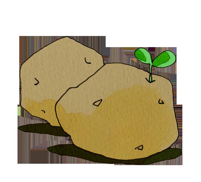ジャガイモ