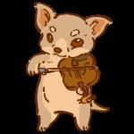バイオリンを弾くチワワ4