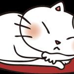 座布団の上のいくら(猫)