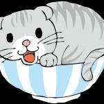どんぶり猫