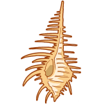 貝殻その1