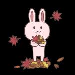 ウサギと落葉