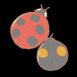 赤と黒のてんとう虫