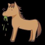 草を食べるウマ