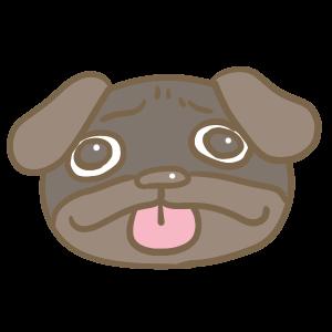 黒パグの顔
