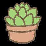 多肉植物(1)