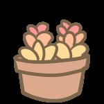 多肉植物(3)