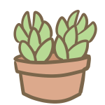 多肉植物(4)