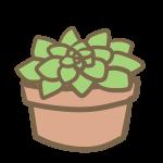 多肉植物(5)