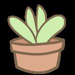多肉植物(7)