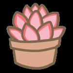 多肉植物(8)