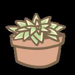 多肉植物(9)
