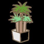 観葉植物(2)
