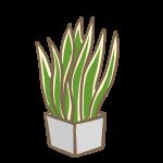 観葉植物(3)