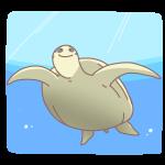海を泳ぐカメ