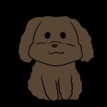 トイプードル(黒)