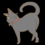 ツンとした黒猫