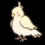 オカメインコ(白)