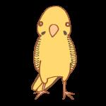 黄色いインコ