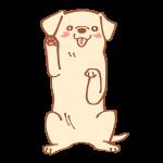 ハイタッチする犬