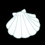 白い2枚貝