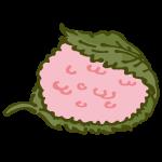 桜もち(道明寺タイプ)